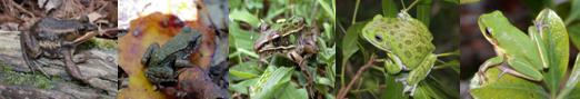 Pictures of various frogs in their natural environments.