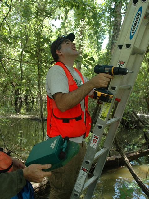 ARMI scientist H. Waddle installs automated frog call recorders<br />Photo by: USGS