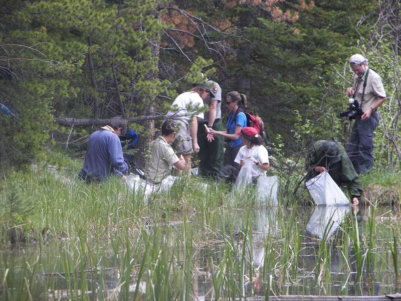 Release site and interagency crew<br />Photo by: RMNP