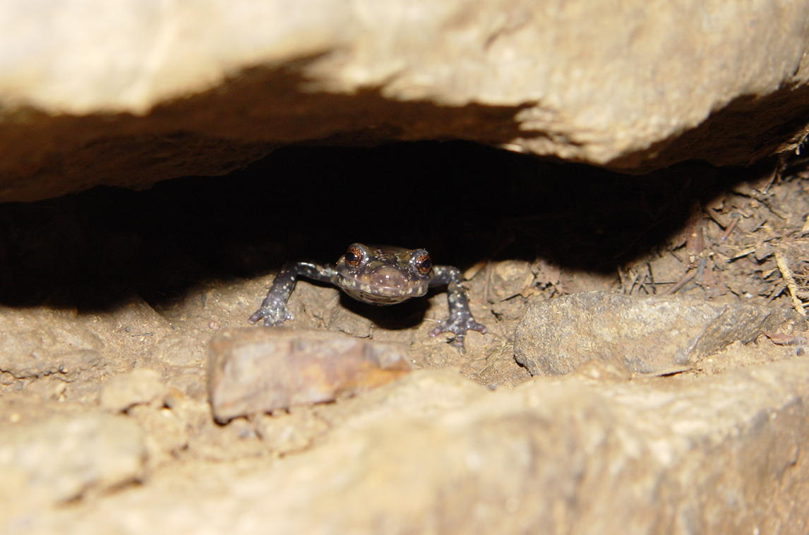 <strong>Source:</strong> USGS National Wetlands Research Center. <strong>Photographer:</strong> Brad M. Glorioso. In a crevice of a cave; Walker County, Georgia.