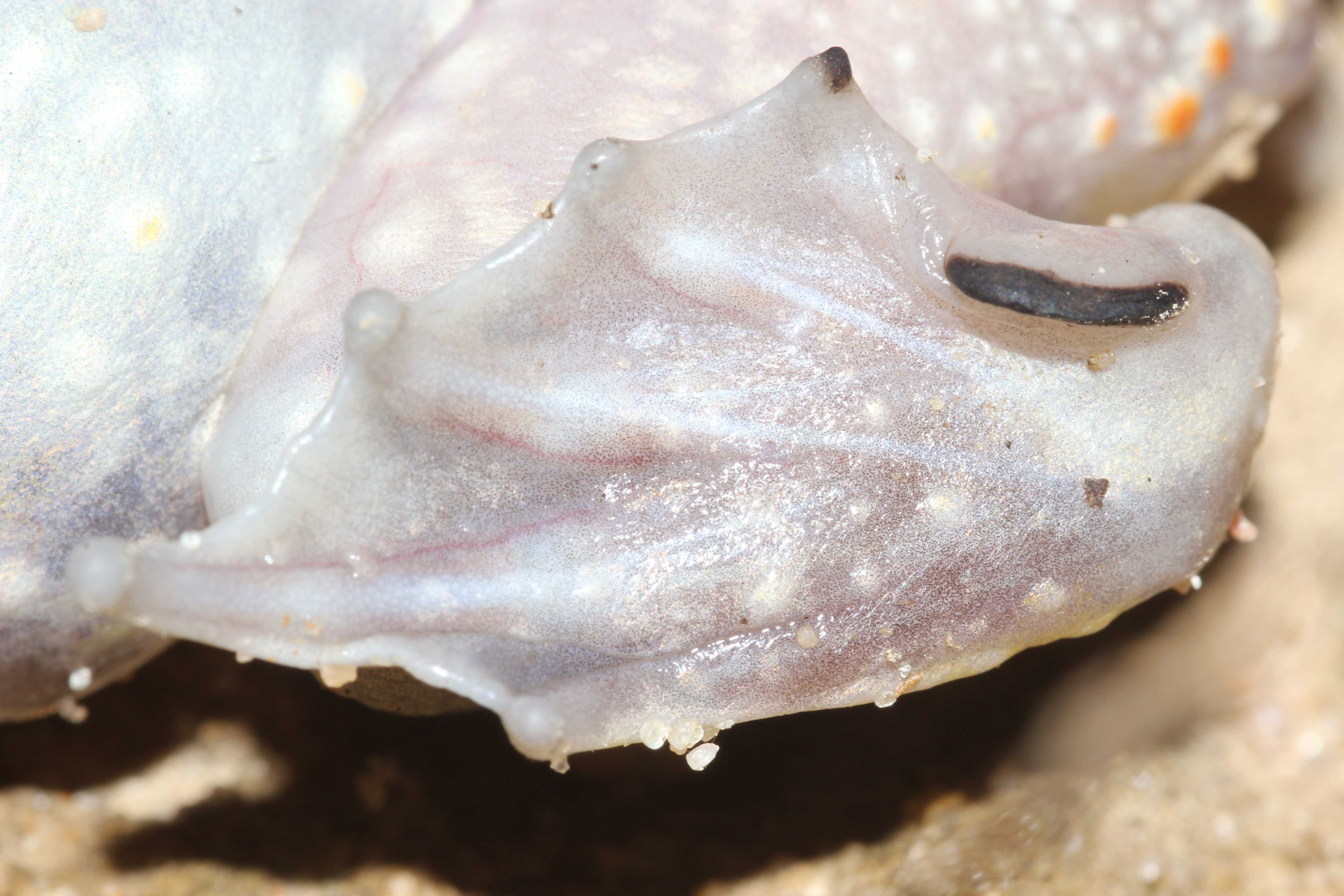 <strong>Source:</strong> USGS National Wetlands Research Center. <strong>Photographer:</strong> Jeromi Hefner. Close Up of Spade; Florida Panhandle.